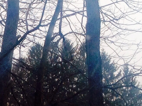 Snow falls past trees