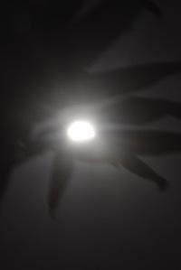 Moon - 1