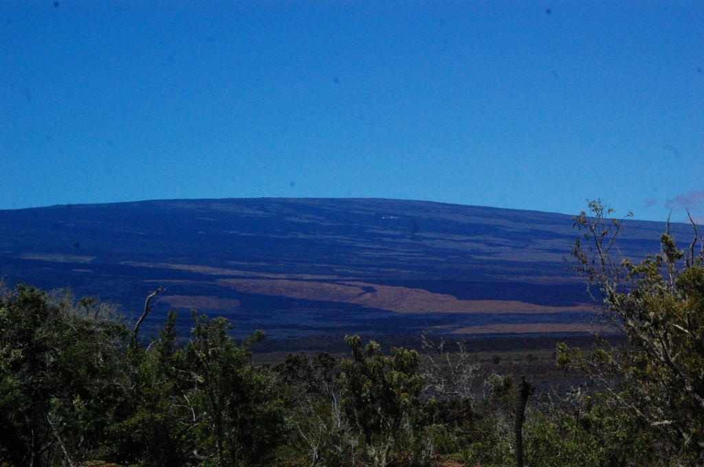 Mauna Loa (where some sheep live).